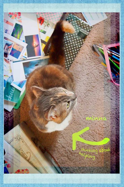 cat surrounded by images to create vision board